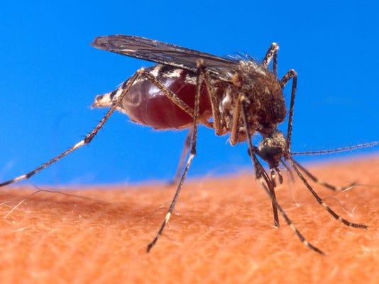 636360541064359170-0525-TCLO-mosquito.JPG