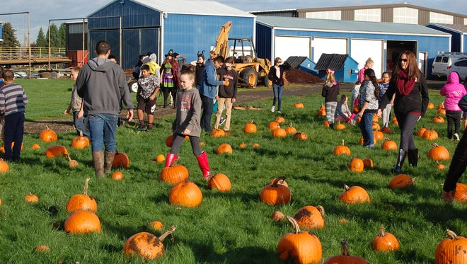 Children pick out pumpkins at a makeshift pumpkin patch put on by Gervais High School FFA students on Friday, Oct. 28, 2016.