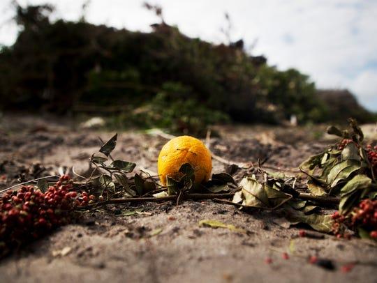 A lone citrus fruit sits at a public dump site for