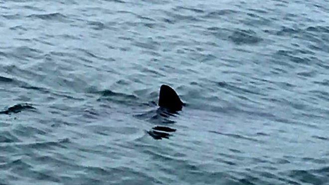 The Wells Police Department posted this photo and a warning after a shark sighting off Wells Beach Thursday.