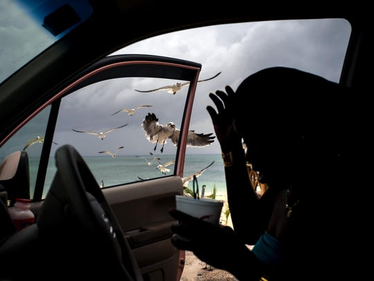 Seagulls fly toward a woman feeding them french fries from her car on Taino beach before the arrival of Hurricane Dorian in Freeport, Grand Bahama, Bahamas, Sunday Sept. 1, 2019. Hurricane Dorian intensified yet again Sunday as it closed in on the northern Bahamas, threatening to batter islands with Category 5-strength winds, pounding waves and torrential rain. (AP Photo/Ramon Espinosa)