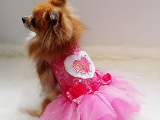 636002972732478366-Dog-designer-boutique-01.JPG