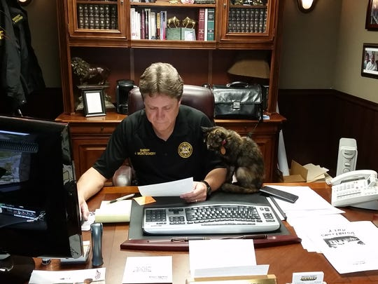 Cornbread the cat supervises Baxter County Sheriff John Montgomery as he does paperwork in his office. The well-known office mascot has passed away, the Baxter County Sheriff's Office announced Tuesday.