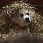 Budweiser's Super Bowl commercial features a lost puppy trying to find its way home.