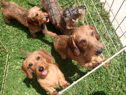 Bridgewater Dog Park