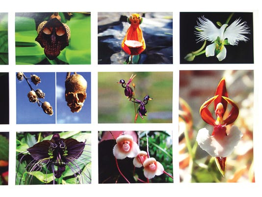 636117794486616713-flower-postcard-front-20160721-SYL.jpg