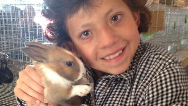 Cassandra Retton holds one of her remaining rabbits at the Richland County Fair.