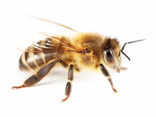 -bee.jpg_20080313.jpg