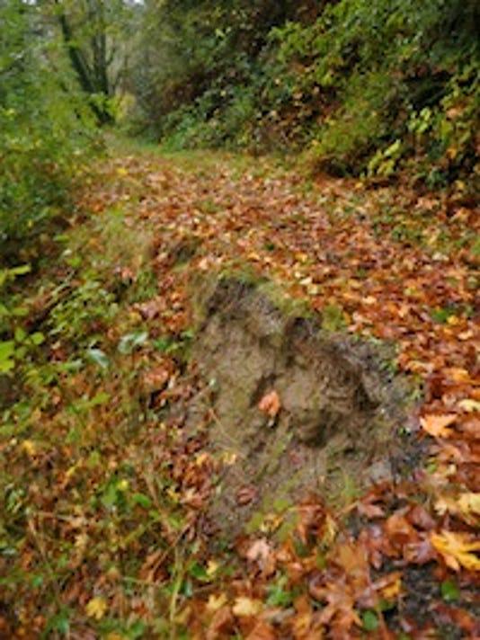 Slide-damaged portion of the park's trail. Tristan Baurick/Kitsap Sun