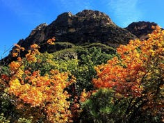 Your guide to Fall Colors inside Guadalupe Mountains National Park