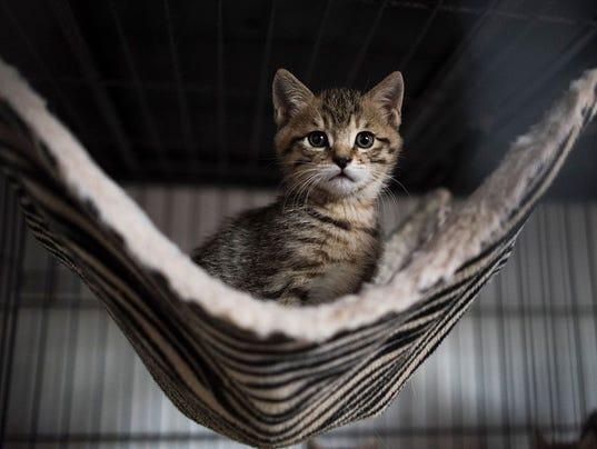 CHINA-ANIMALS-CATS