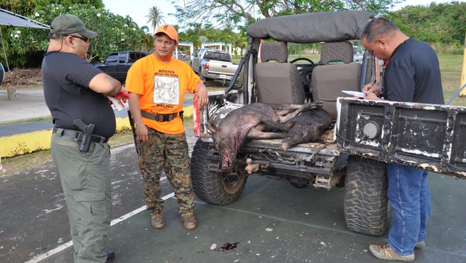 In this file photo, Joey Terlaje, center, shows Sgt. Mark Aguon, a Department of Agriculture conservation officer, left, the two wild pigs he and fellow hunter Joseph Castro, not pictured, killed during a Pig Hunting Derby.