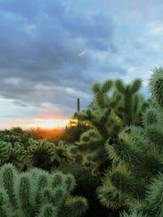 A sunrise frames cholla at White Tank Mountain Regional