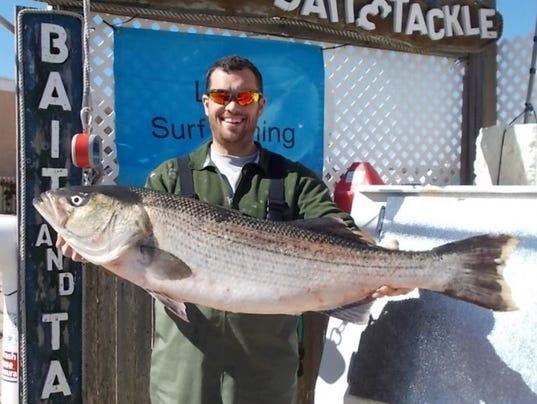 Shore fishing fall bass run starting to hit its stride for Nj shore fishing