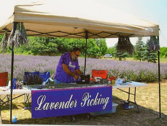 New York Lavender Festival in Red Creek offers a variety