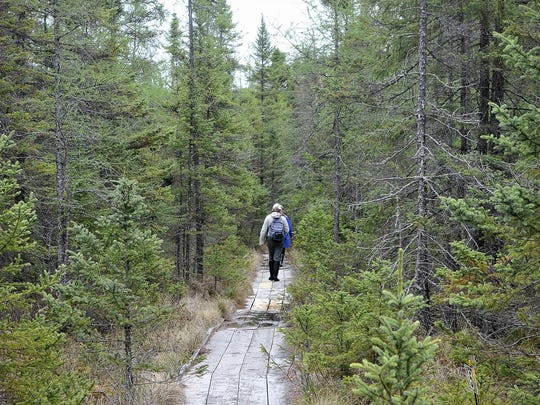 In mid-May, the bog at Long Lake Conservation Center remained mosquito-free. That changed as the summer progressed. Bogs are known for mosquitoes and unpredictable footing. The boardwalk here extends about 800 feet.