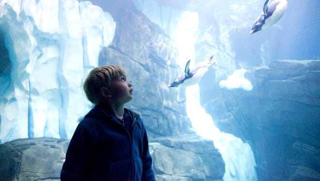 Chad Carr, 4, of Saline, Mich., watches penguins swim by at Antartica: Empire of the Penguin at Sea World in Orlando, Fl., on Nov. 18, 2014.
