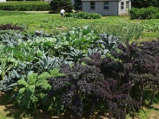 WSF-0916-veggies.jpg