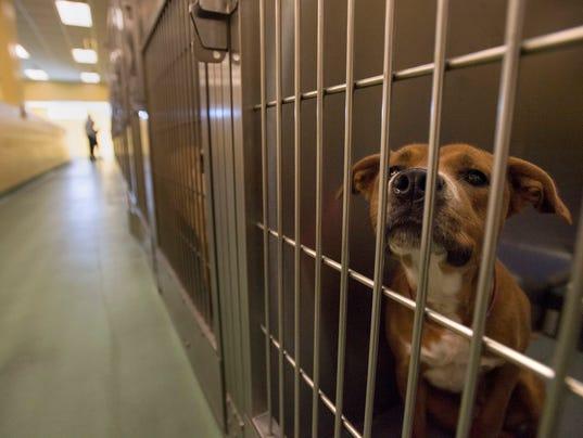 636187155373566137-Pet-Adoption-3.JPG