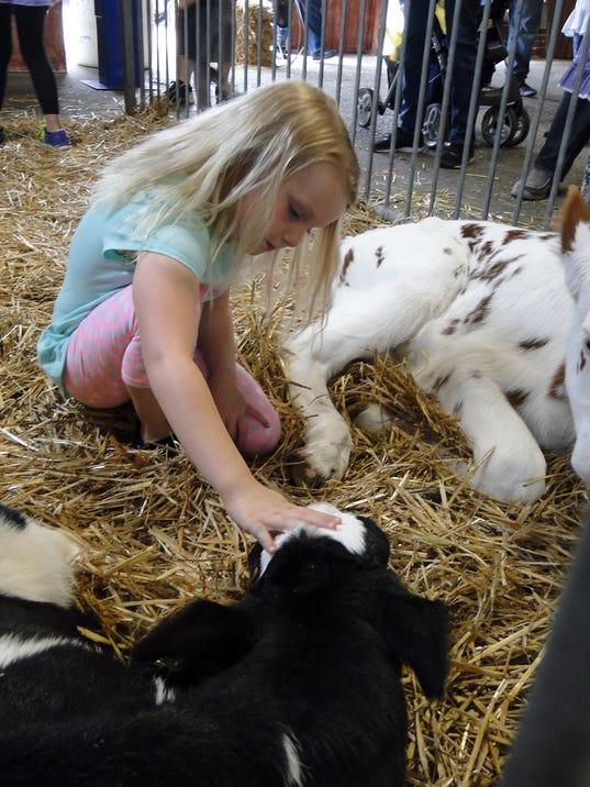 WSF 0525 JDM Gloria calves