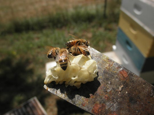 Beekeeping will be on display at the How-To Fair at the Anderson County Library on Saturday.