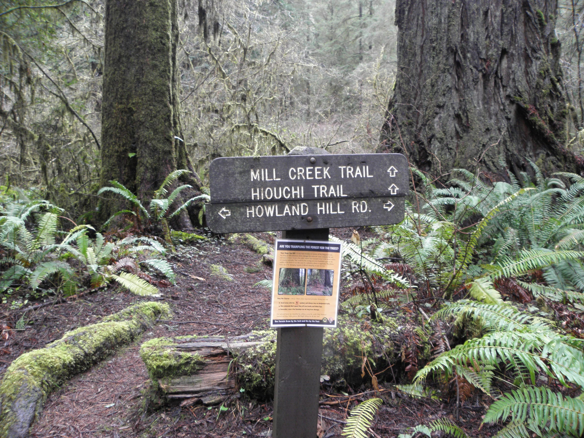 Signs placed last summer on Mill Creek Trail are designed to keep hikers on established trails and not go searching for the Grove of Titans.
