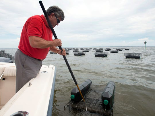 Pensacola resident Donnie McMahon III checks on the health of an oyster colony he is farming in Escambia Bay.