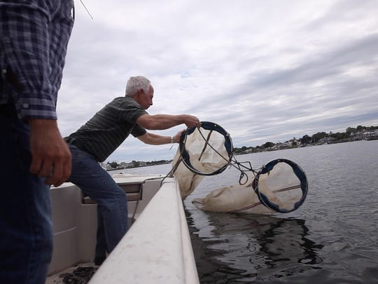 Gary Buchanan, director for the Division of Science, Research and Environmental Health, trawls for jellyfish in the Shrewsbury River.