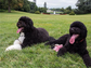 Michelle Obama posted this shot of the presidential family's dogs, Sunny and Bo, to her Instagram page.
