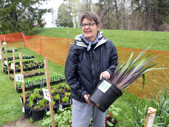 Carol Capobianco, the director of the Native Plant Center holds an Iris Gerald Darby at the Native Plant Center at Westchester Community College in Valhalla. This year's sale is April 27.