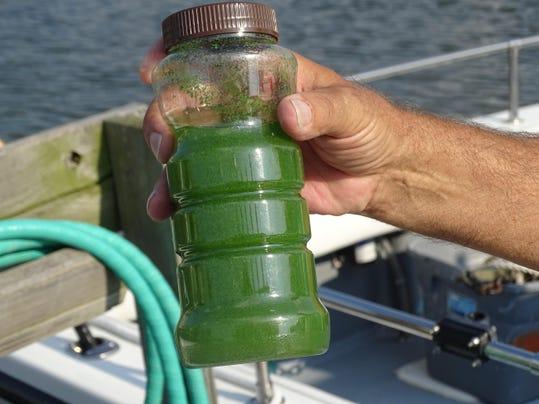 PTC 0822 algae problems 2