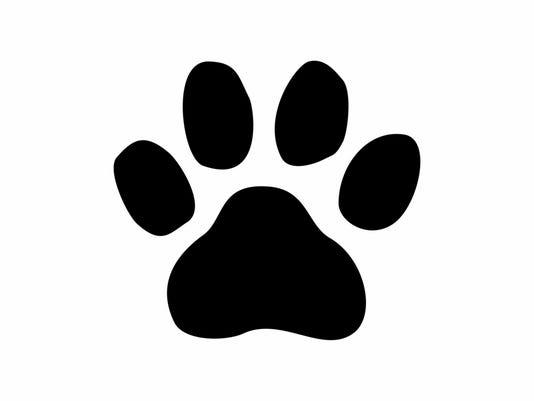 dog paw print