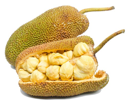 Jackfruit fruit.
