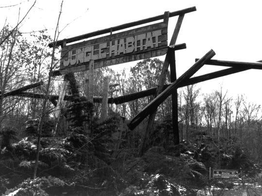 Jungle habitat-Mark Moran