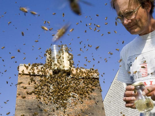 Swarm Bee Research