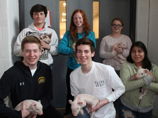 In this Monday, Feb. 19, 2018, photo, Beaver Dam High School students hold six piglets that were born at the high school on Saturday include, front row from left, Mason Ferron, Andy Boschert and Isabelle Ruiz and back row from left, are Dustin Wendt, Caitlyn Poels and Reagen North at Beaver Dam High School in Beaver Dam, Wis.