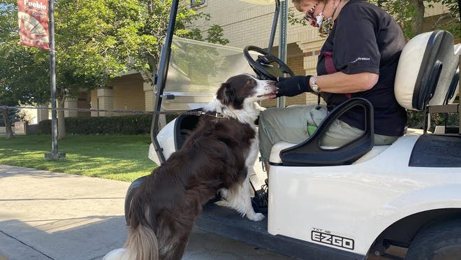 """Cindy Miller gives Casper a treat on the campus of Pueblo Community College. Miller, who works in the mail room at the school, feeds dogs along her delivery route every day."""""""