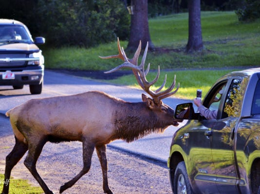 When the bull elk are in rut, the area near Winslow Hill is a busy place for tourists.