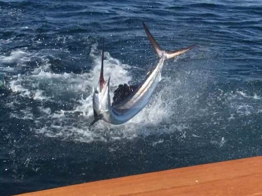 A sailfish leaps behind Showtime! as angler Nancy Hardwick of Sailfish Point reels it in during a tournament in October.