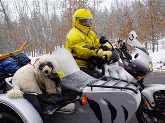 Pets-Sidecar Dogs