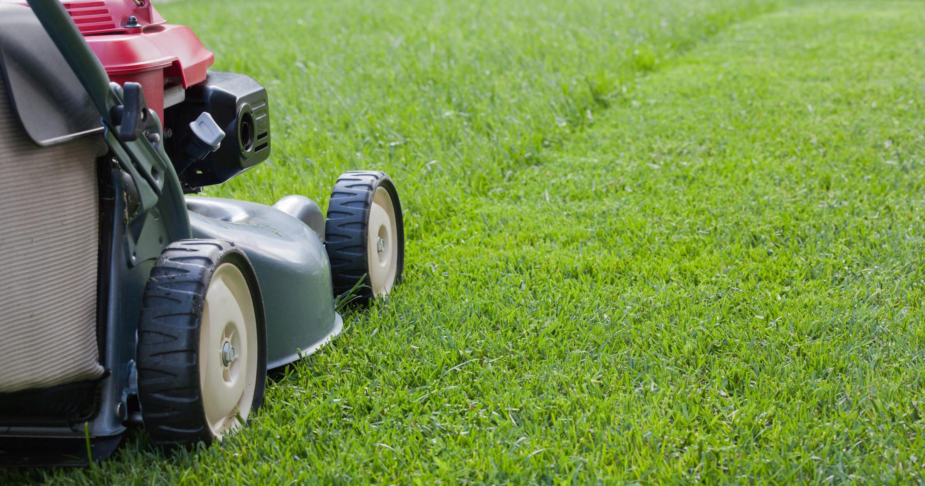 On mowing: 'Grass always disappoints'