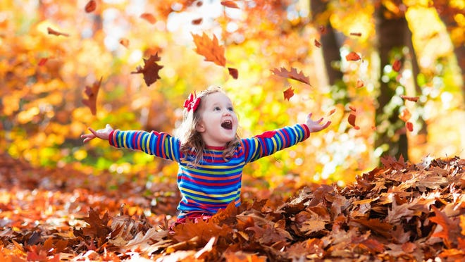 A girl plays with fallen leaves. More leaves are changing color and starting to fall off of trees as we move further into autumn.