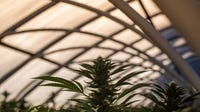 Iowa City, and other towns with large out-of-state populations, could face issues as more states legalize marijuana, says Senator Joe Bolkcom, D-Iowa City.
