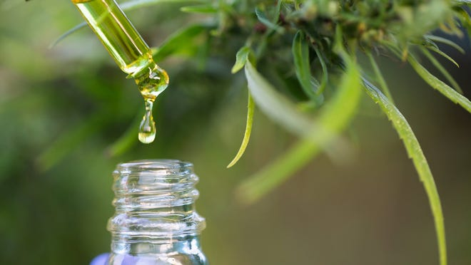 CBD oil dripping from a dropper into a bottle with a hemp plant in the background