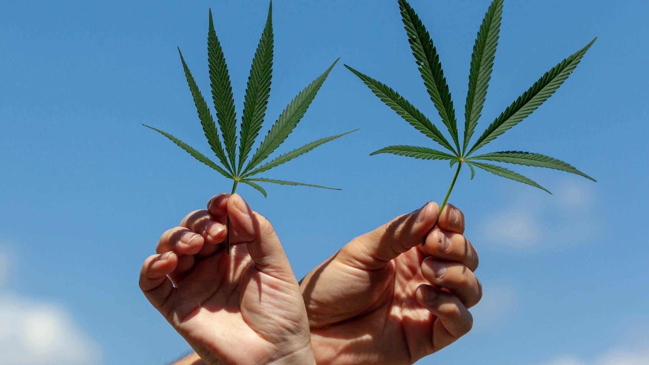 Louisiana bill decriminalizing marijuana signed into law Tuesday