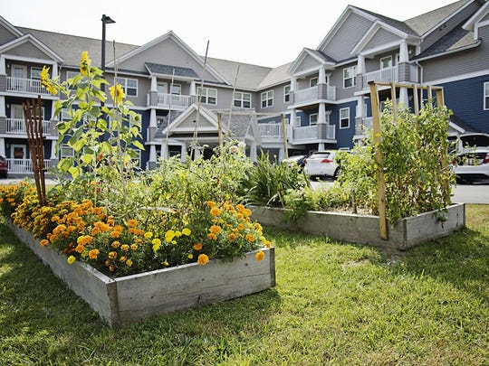 Residents of Pinecrest in Essex can plant flowers or vegetables in the ring of raised beds between the two buildings, designed for people 55 and older who can live independently.