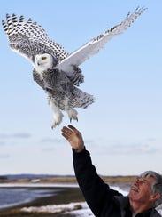 Norman Smith, director of Mass Audubon's Blue Hills