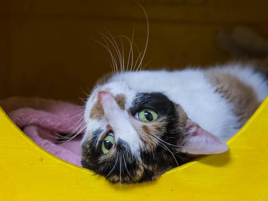 One of the many cats at the no-kill cat shelter at