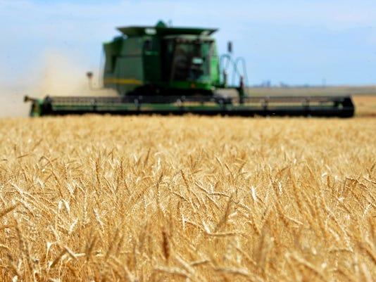 -07212015_gasvoda, wheat harvest-a2.jpg_20150722.jpg