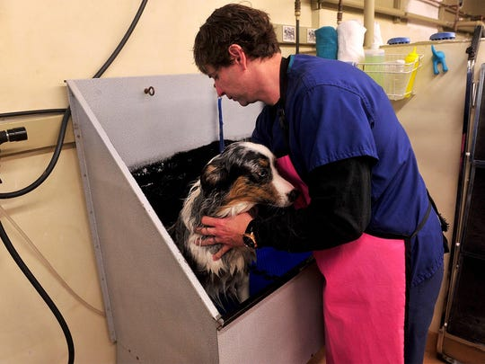 Lee Walker washes his dog, Jet, at Bathe Your Own Dog